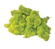 iceland moss 2
